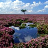 A Historic Tour of North York Moors National Park